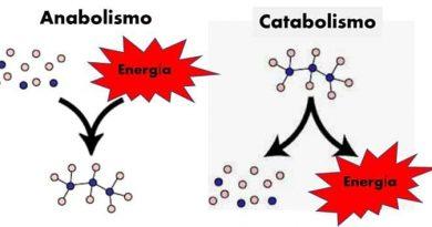 Metabolismo lento no adelgazo