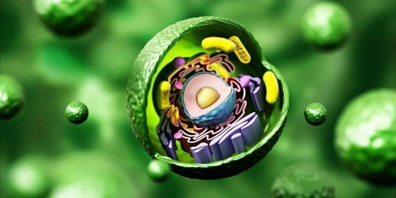 1 2 2 Estructura Y Función De Los Organelos Celulares